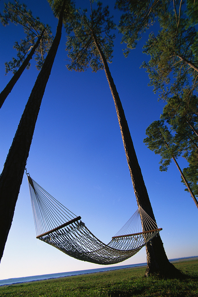 hammock in the sun