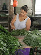 a woman bundling palm fronds
