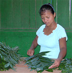 a woman sorting palms