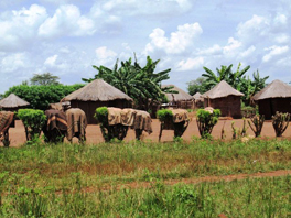Photo of buildings with thatched roofs.