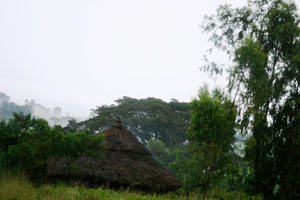 A rural grassy and semi-forested area in South Sudan.