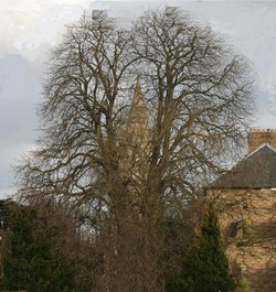 Photo of a tower behind a leafless tree.
