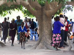 Men, woman, boys and girls stand under a tree with a very large trunk.