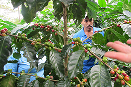 Nicaraguan fair-trade coffee farmer Courtesy of C. Jeanne Clapp
