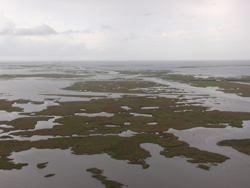 An aerial view of the Louisiana Wetlands.