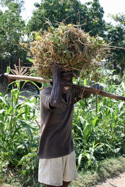 A farmer carrying crops over his head.