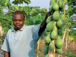 A man with papayas