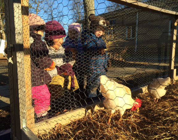 children and chickens