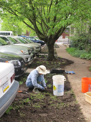 Swarthmore Presbyterian Church HOE group plants ground cover