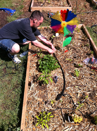 A man installing an irrigation system into a plot of a community garden.