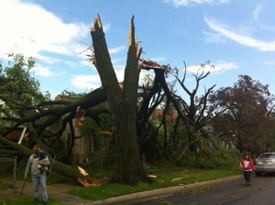 A tree snapped in half by a tornado.