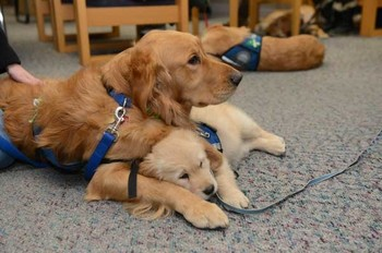 Comfort dogs from Lutheran Church Charities