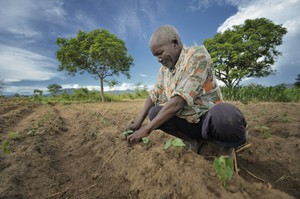 Nerbert Pasidya Mkandawire, 63, encourages his bean plants in Malawi. The country has endured drought and flooding during the crucial planting and harvest seasons. The difficulty of crops surviving these crises has led to food shortage throughout the country.