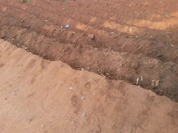 A recently tilled field in Mzuzu, Malawi, ready for planting. Many households plant small crops of corn at their home and then larger fields of corn on the outskirts of the city.