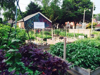 In 2015, the Garden Keepers just.good.food gardens produced 1500 pounds of food for distribution in Milwaukee, Wisconsin.